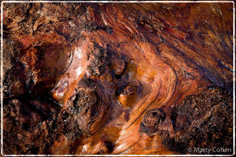 Wet Driftwood