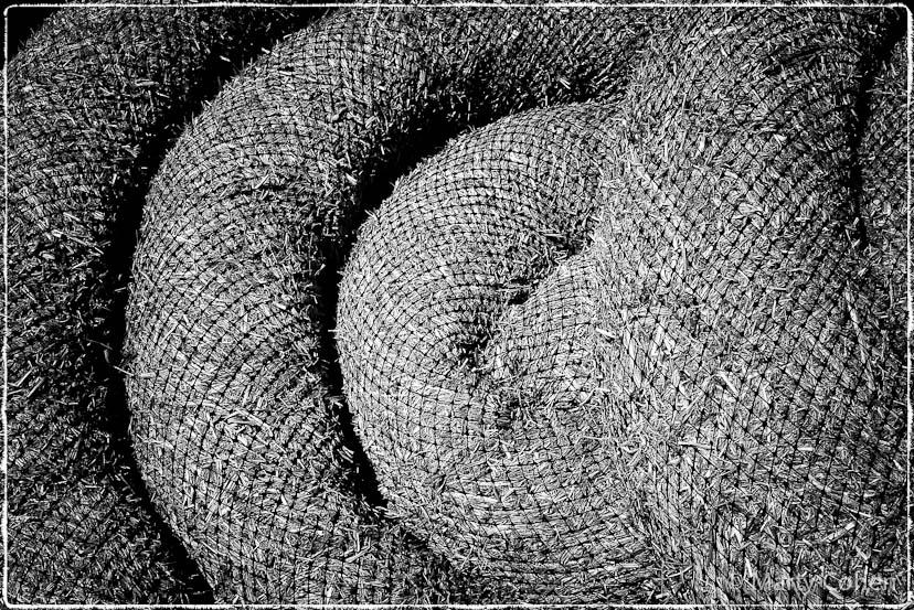A Windhook Wattle