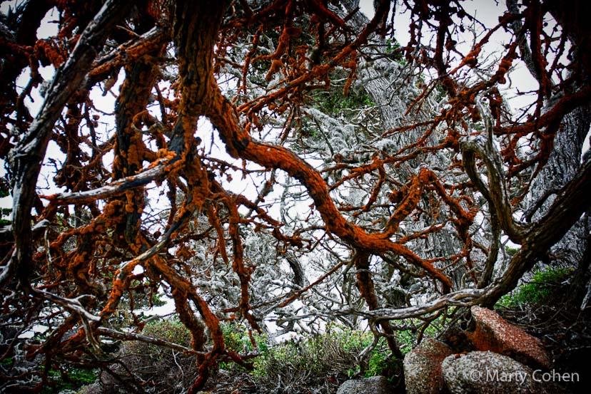 Mystical Point Lobos Tree