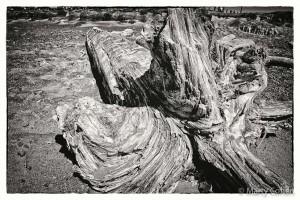 San Simeon Beach Driftwood