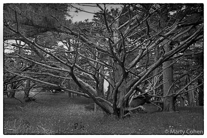 The Old Cypress on the Cypress Grove Trail