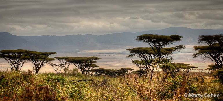 Acacia Trees at the Rim of the Crater