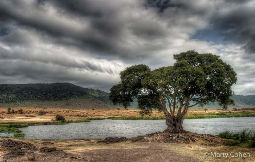 Ngorongoro Crater Watering Hole