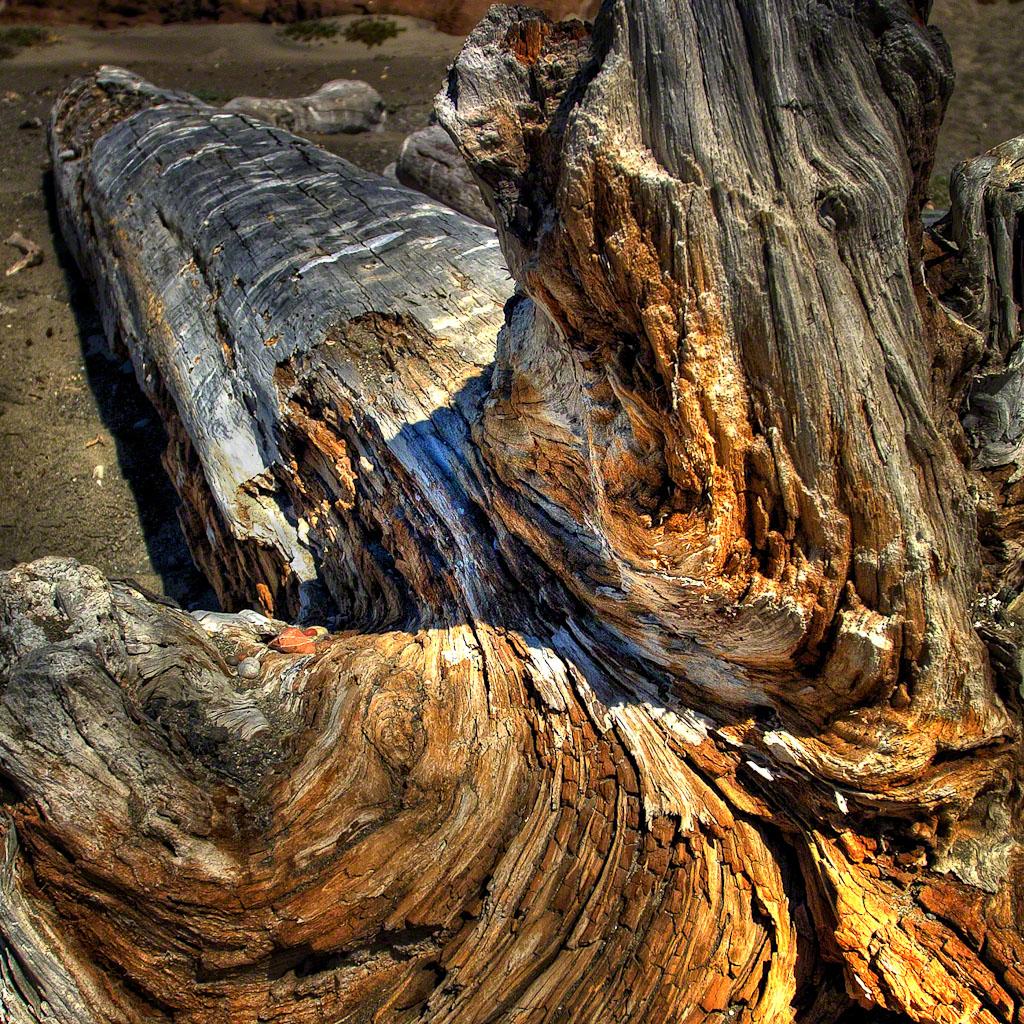 Driftwood_San_Simeon_Beach