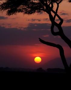 The Setting Sun and the Tree in Amboseli