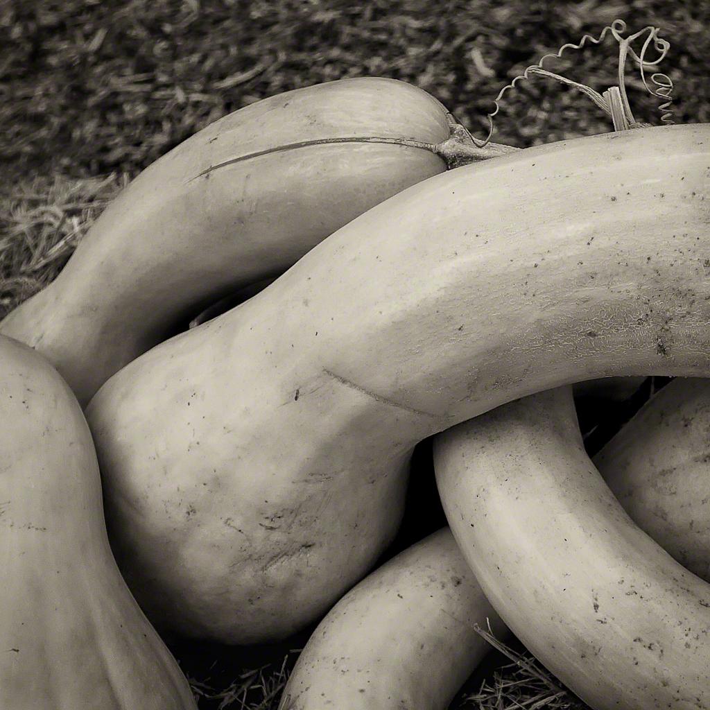 Neck Pumpkins