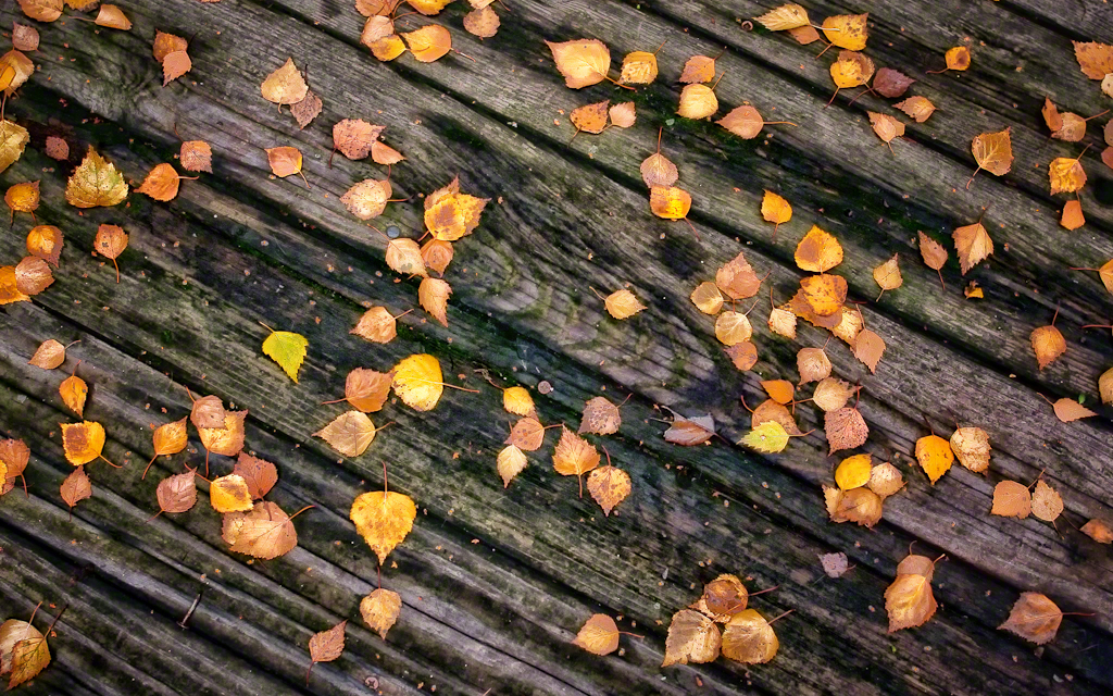 Fallen Leaves 1