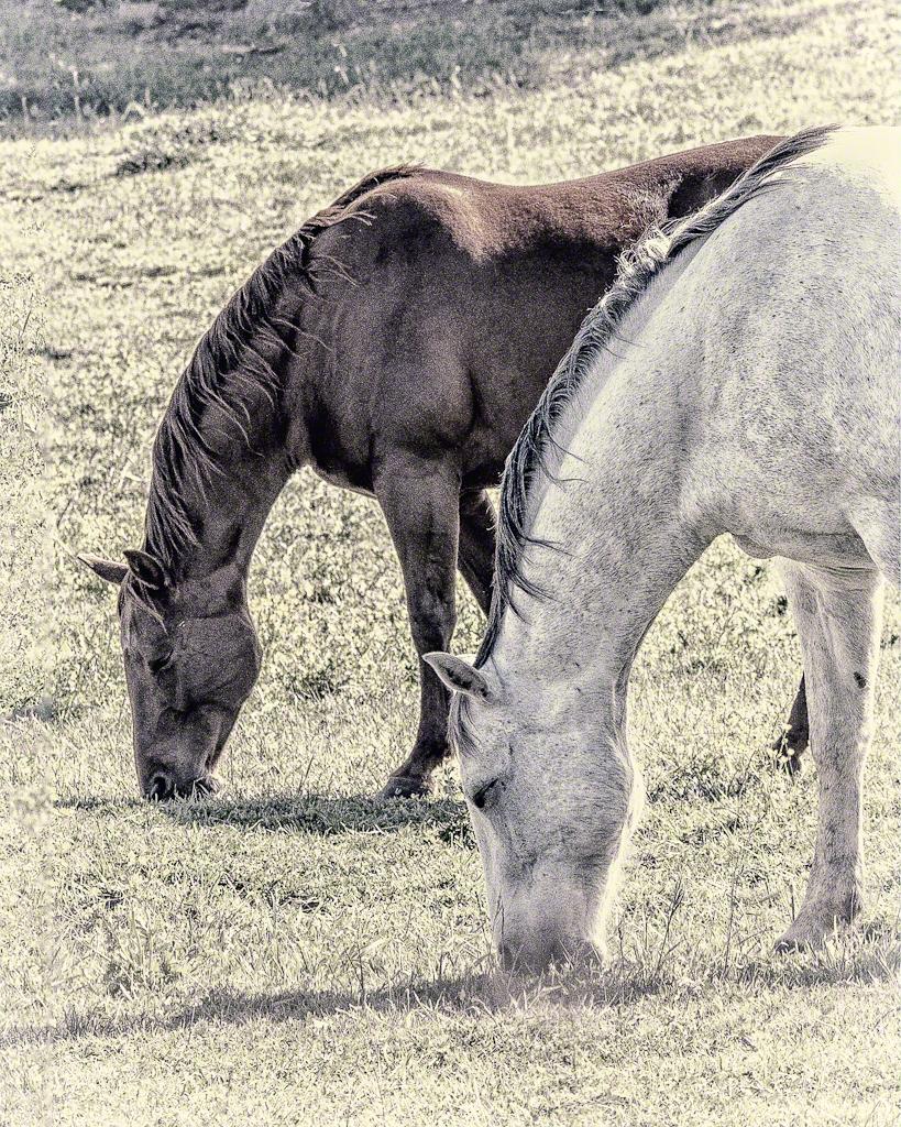 Two Horses at September Ranch