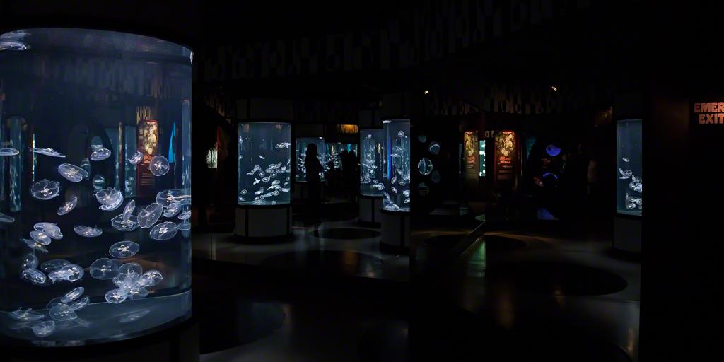 Moon Jelly Exhibit at the Monterey Bay Aquarium