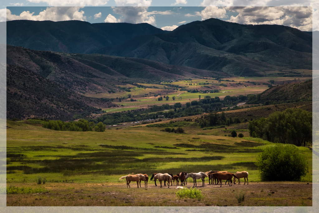 Horses in Snowmass