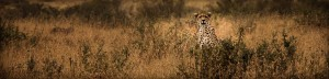 Watching You From The Savanna