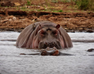"""NG-9 A Hippo """"Happy Moment"""""""