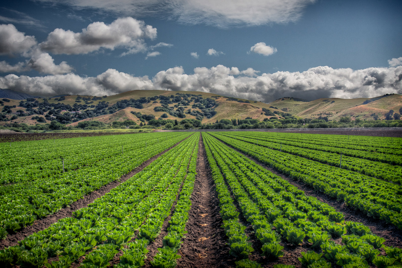 Row Crops in Spreckels